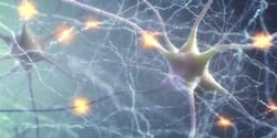 neurons-in-brain